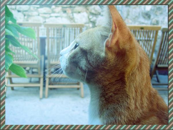 cat-201855_640